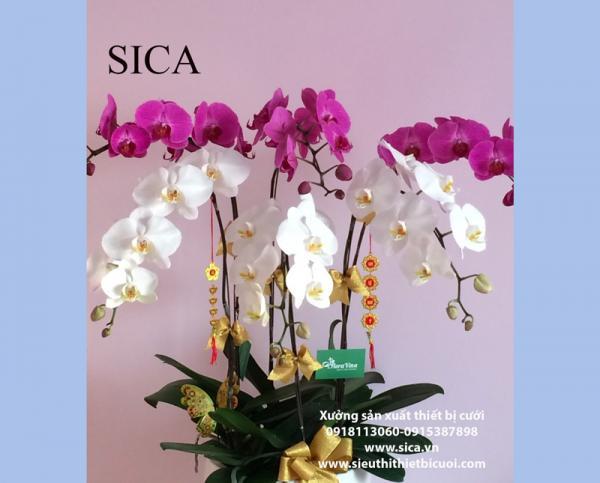 Chuyên cung cấp bình hoa đẹp giá rẻ