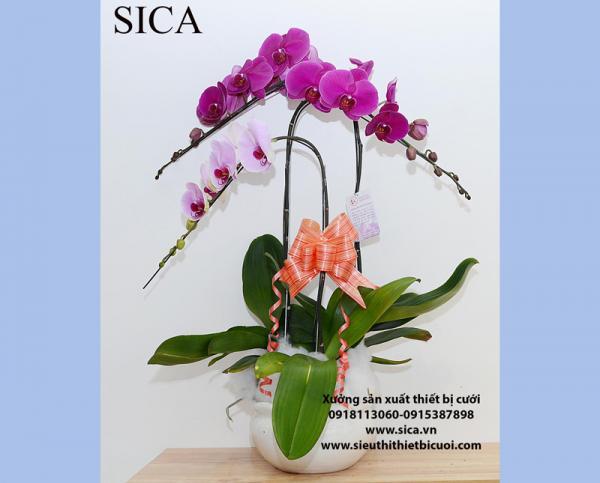 Sản xuất các mẫu bình hoa đẹp rẻ