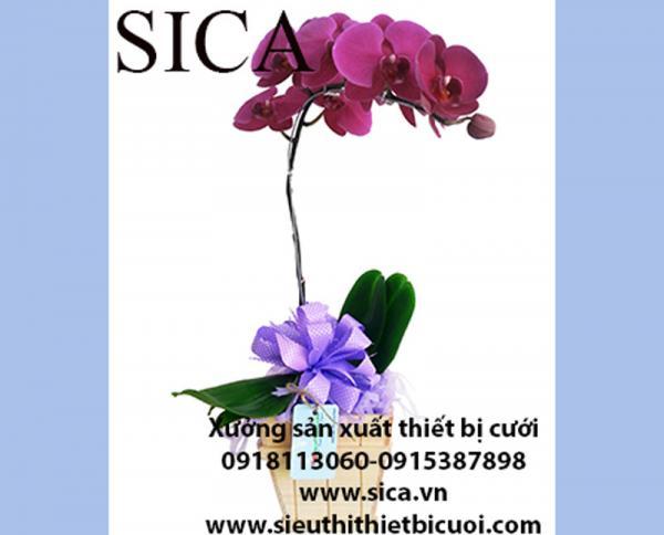 Thiết kế chậu hoa đẹp lạ giá rẻ