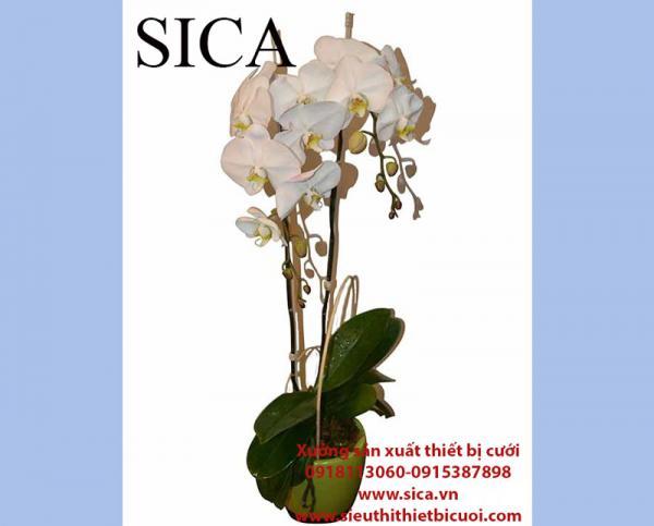 Trưng bày các mẫu chậu hoa đẹp