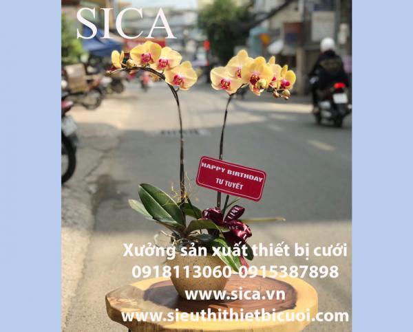 Nơi bán các loại chậu hoa đẹp rẻ