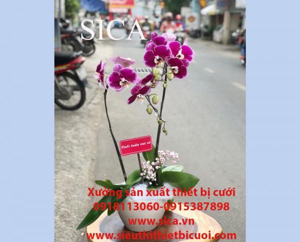 Nơi bán các mẫu chậu hoa đẹp giá rẻ