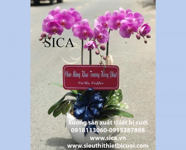 Giá bán một chậu hoa đẹp