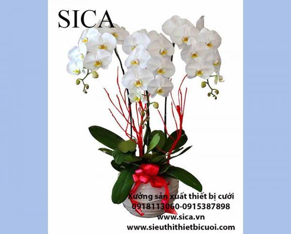 Cung cấp chậu hoa bình hoa đẹp giá rẻ