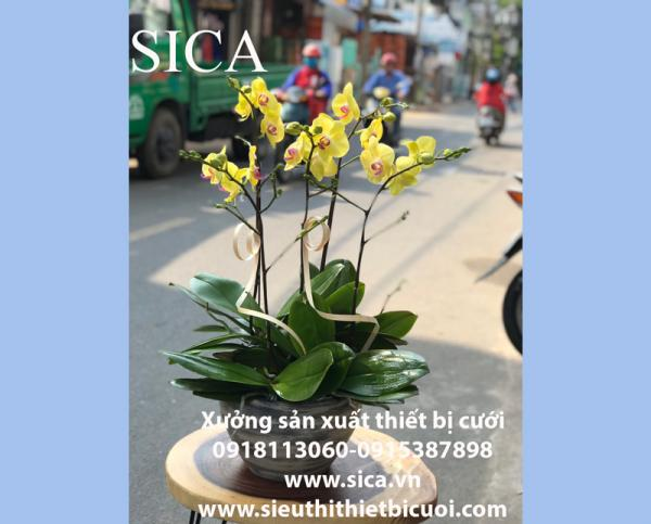 Chuyên bán các mẫu bình hoa đẹp giá rẻ