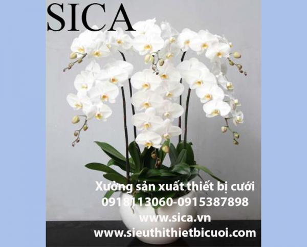 Cập nhật các mẫu chậu hoa đẹp giá rẻ