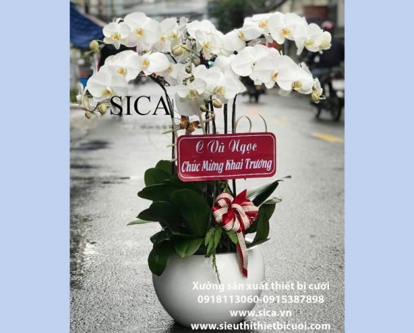 Bán bình hoa lan đẹp giá rẻ