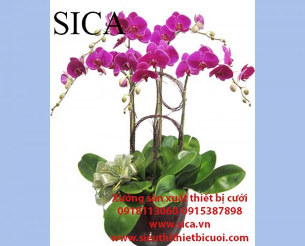 Nơi cung cấp các mẫu chậu hoa giá rẻ