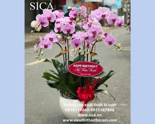 Thiết kế các mẫu chậu hoa trưng bày giá rẻ