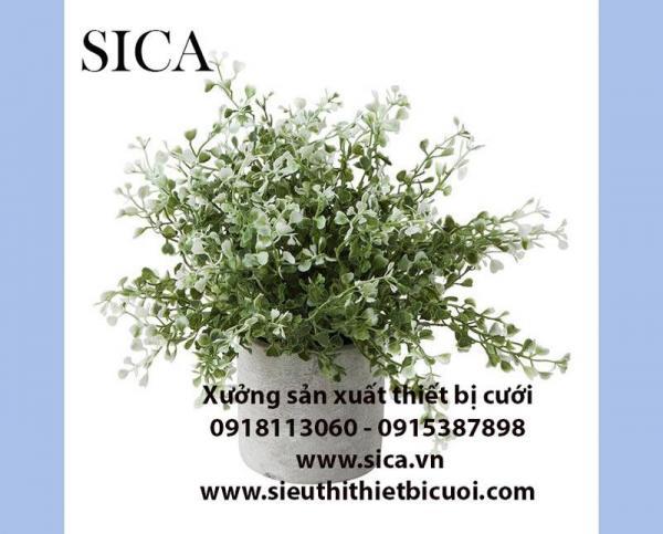 http://www.sica.vn/medium/uploads/SP/21-1575709574.jpg