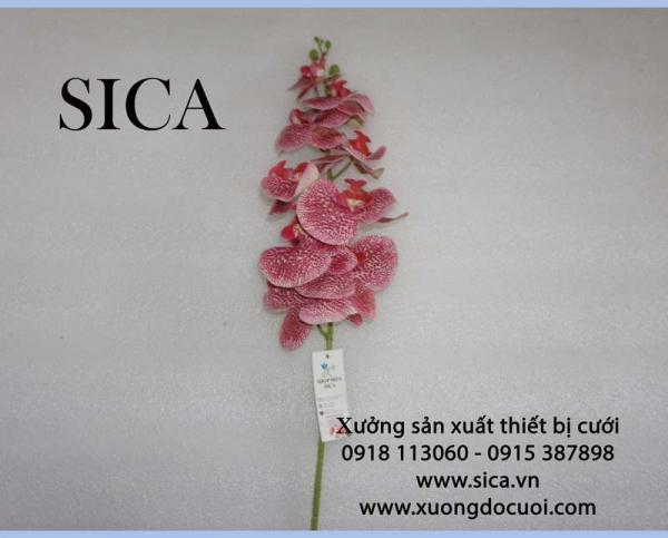 Hoa lan hồ điệp 9 bông loại 3 mẫu 1