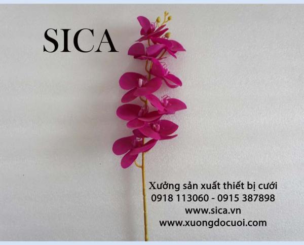 Hoa lan hồ điệp 9 bông loại 3 mẫu 2