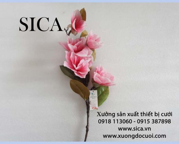 Bán cành hoa ngọc lan giá rẻ