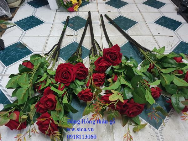 Cành hoa hồng thân gỗ