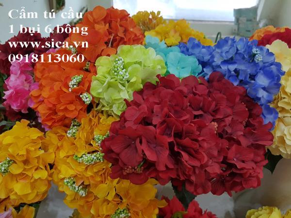 Hoa cẩm tú cầu 6 hoa
