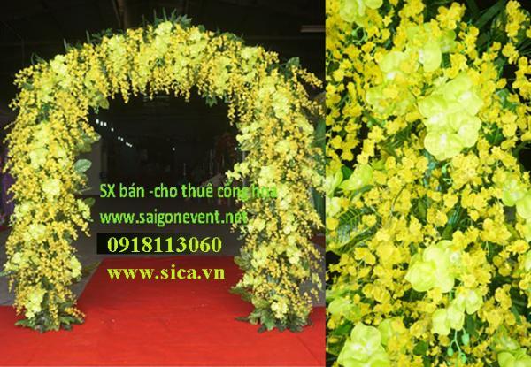 Công hoa cưới màu vàng- hoa lan Vũ Nữ