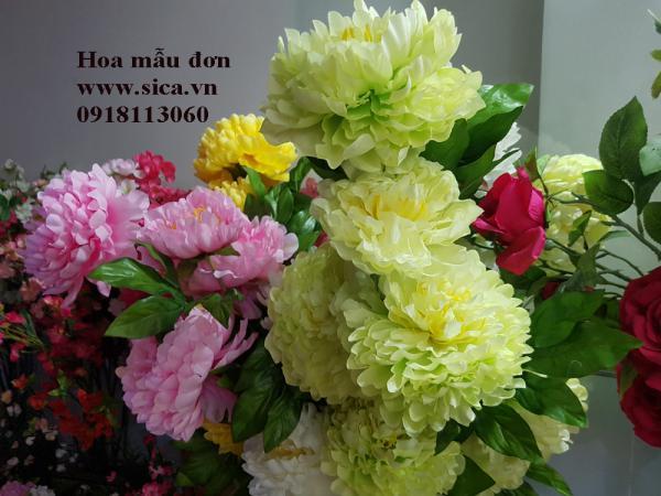 Hoa mẫu đơn 5 bông