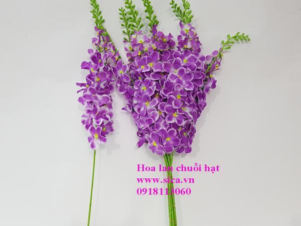 Hoa lan chuỗi hạt VN tím cà