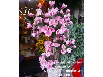 hoa mộc lan hồng